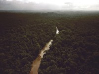 jungle-surrounding-jonestown